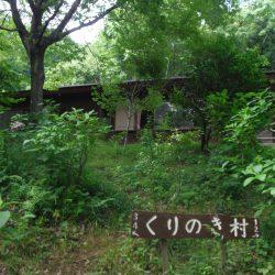 くりのき村